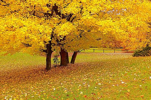 الخريف... 466.jpg