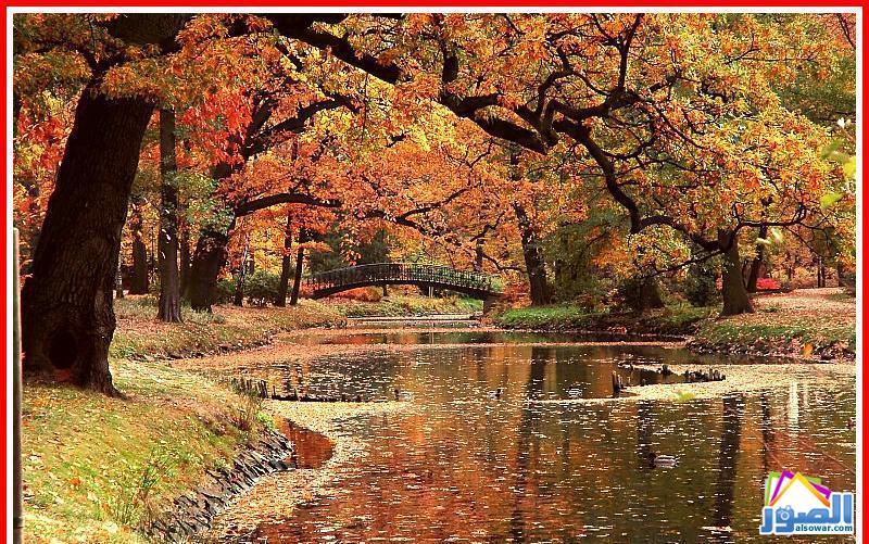 الخريف... 468.jpg