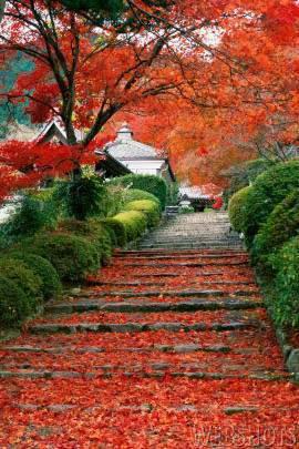 الخريف... 469.jpg