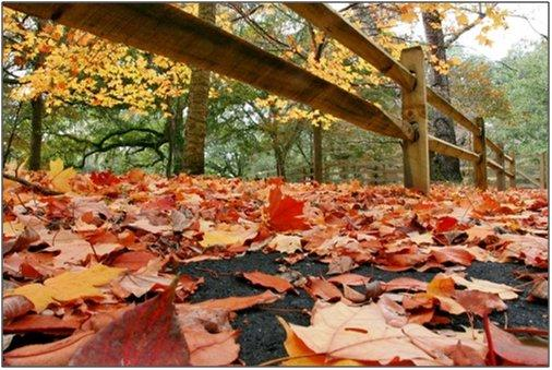 الخريف... 470.jpg