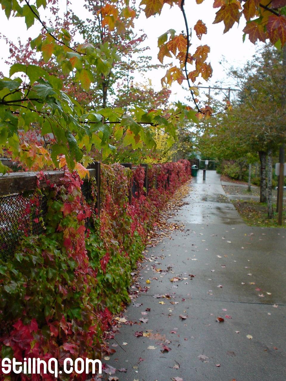 الخريف... 471.jpg