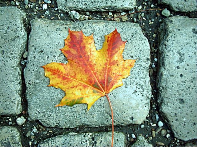 الخريف... 472.jpg