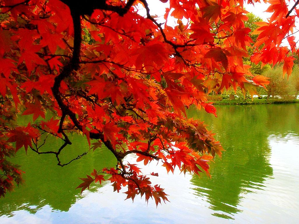 الخريف... 476.jpg