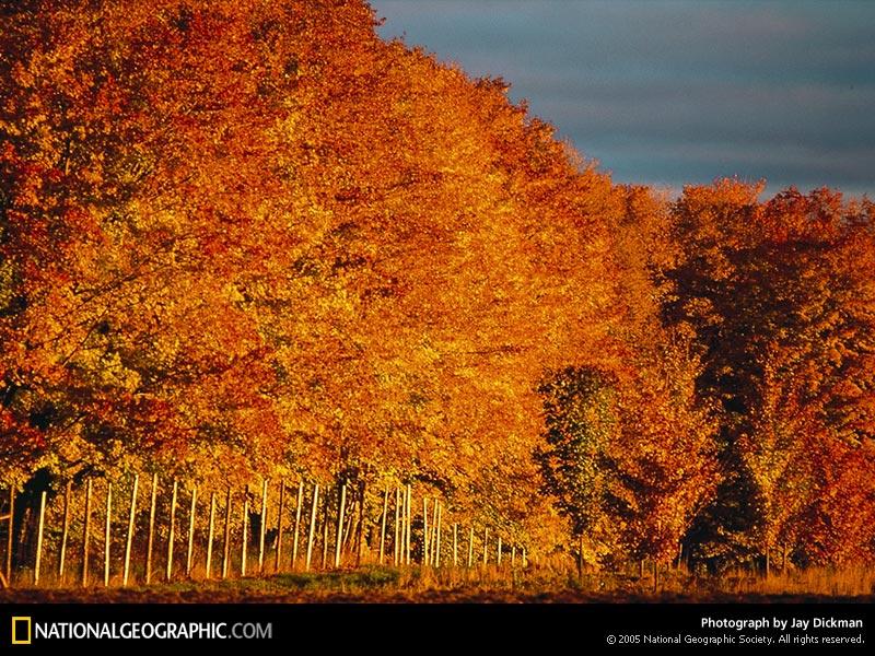 الخريف... 477.jpg