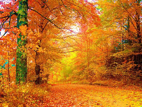 الخريف... 478.jpg