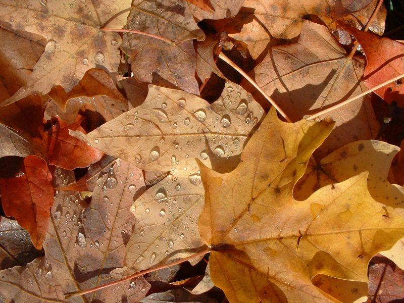 الخريف... 479.jpg
