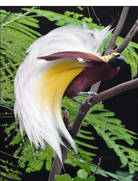 العصافير عصافير 501.jpg