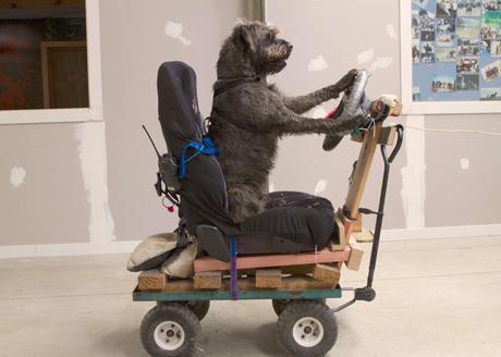 الكلاب المهملة السيارات نيوزيلندا 41.jpg