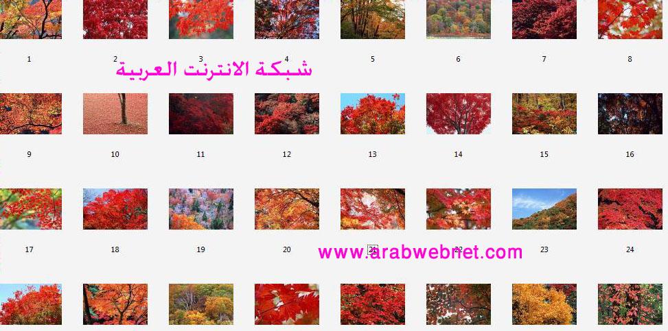 wallpapers 6879.imgcache.jpg